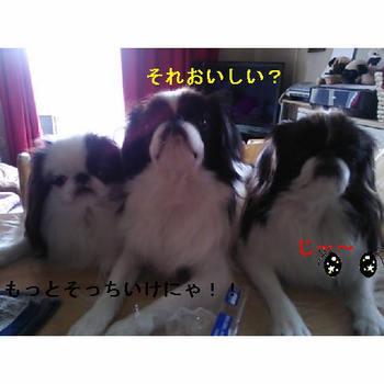 三匹.JPG